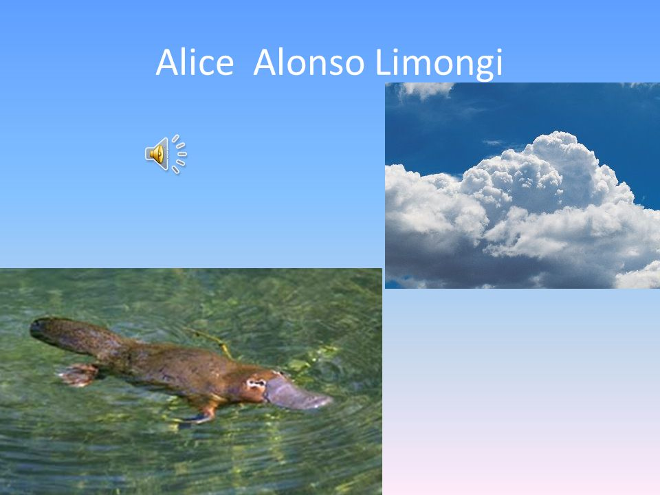 Alice Alonso Limongi