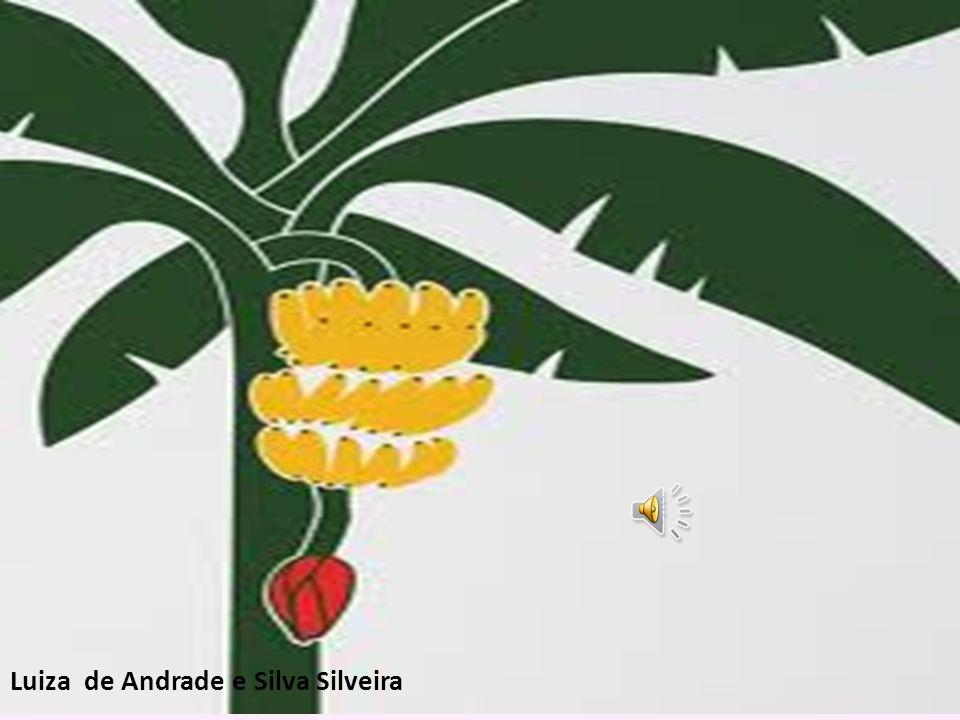 Luiza de Andrade e Silva Silveira