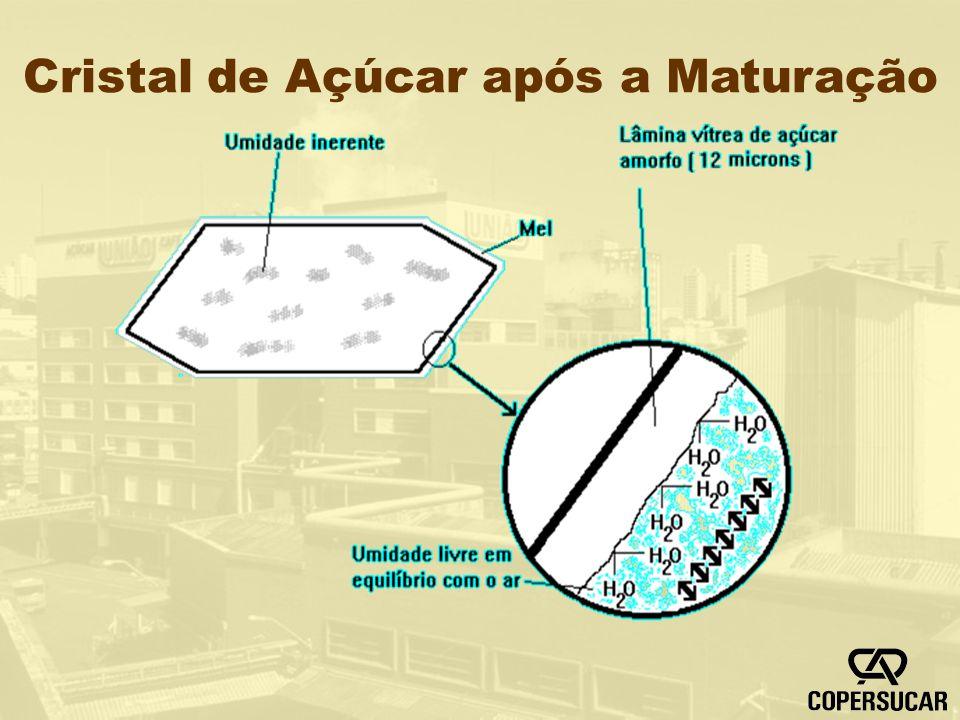 Cristal de Açúcar após a Maturação