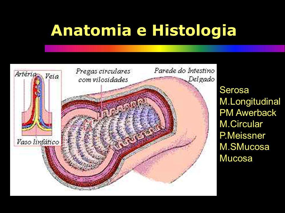 Anatomia e Histologia Serosa M.Longitudinal PM Awerback M.Circular