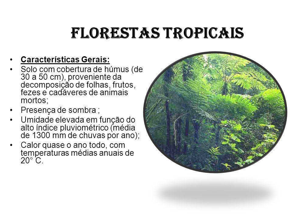 FLORESTAS TROPICAIS Características Gerais: