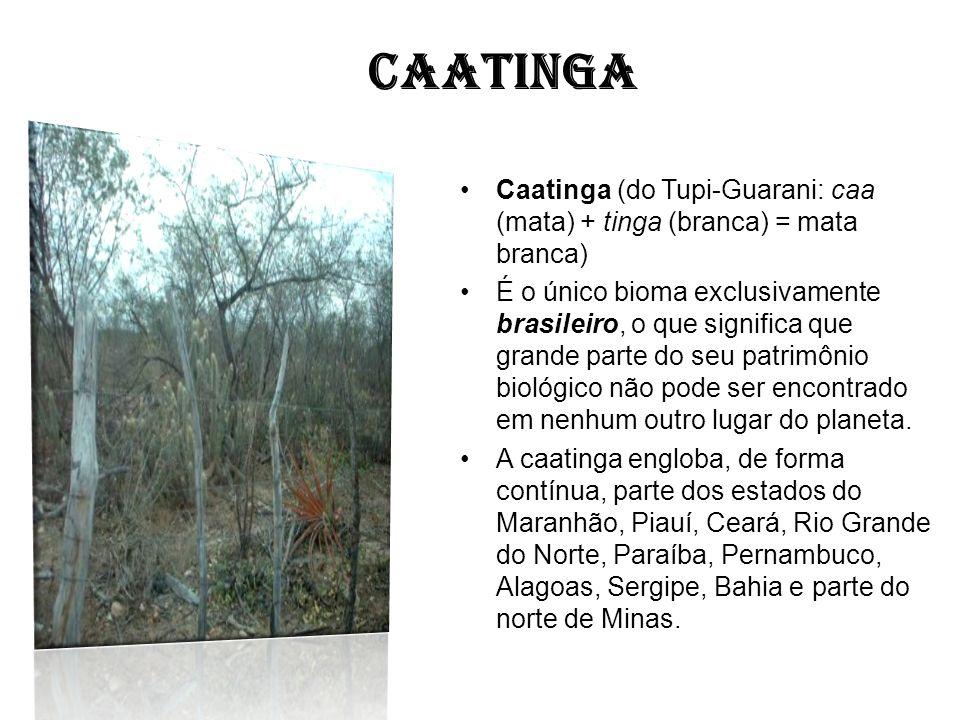 CAATINGA Caatinga (do Tupi-Guarani: caa (mata) + tinga (branca) = mata branca)