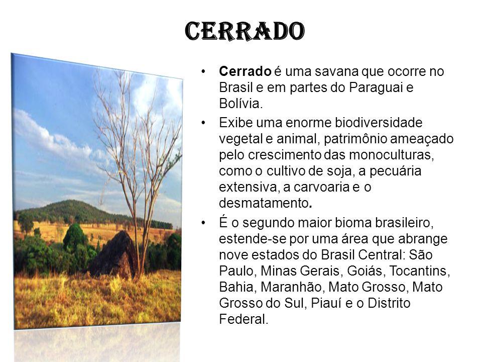 CERRADO Cerrado é uma savana que ocorre no Brasil e em partes do Paraguai e Bolívia.