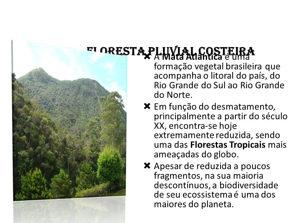 FLORESTA PLUVIAL COSTEIRA