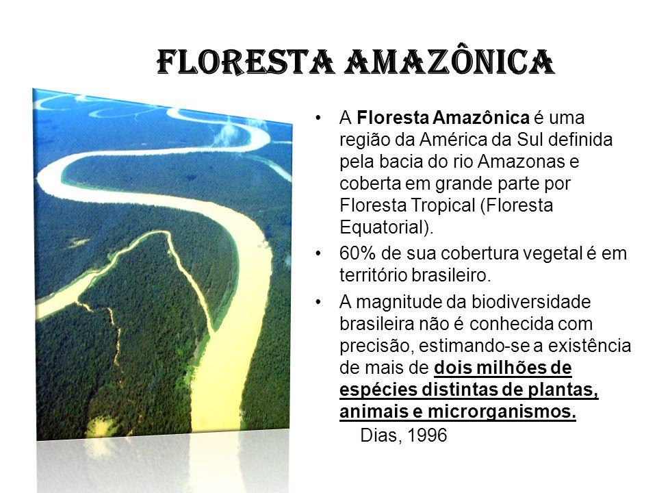 FLORESTA AMAZÔNICA