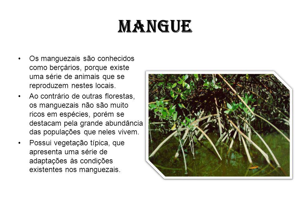 MANGUE Os manguezais são conhecidos como berçários, porque existe uma série de animais que se reproduzem nestes locais.