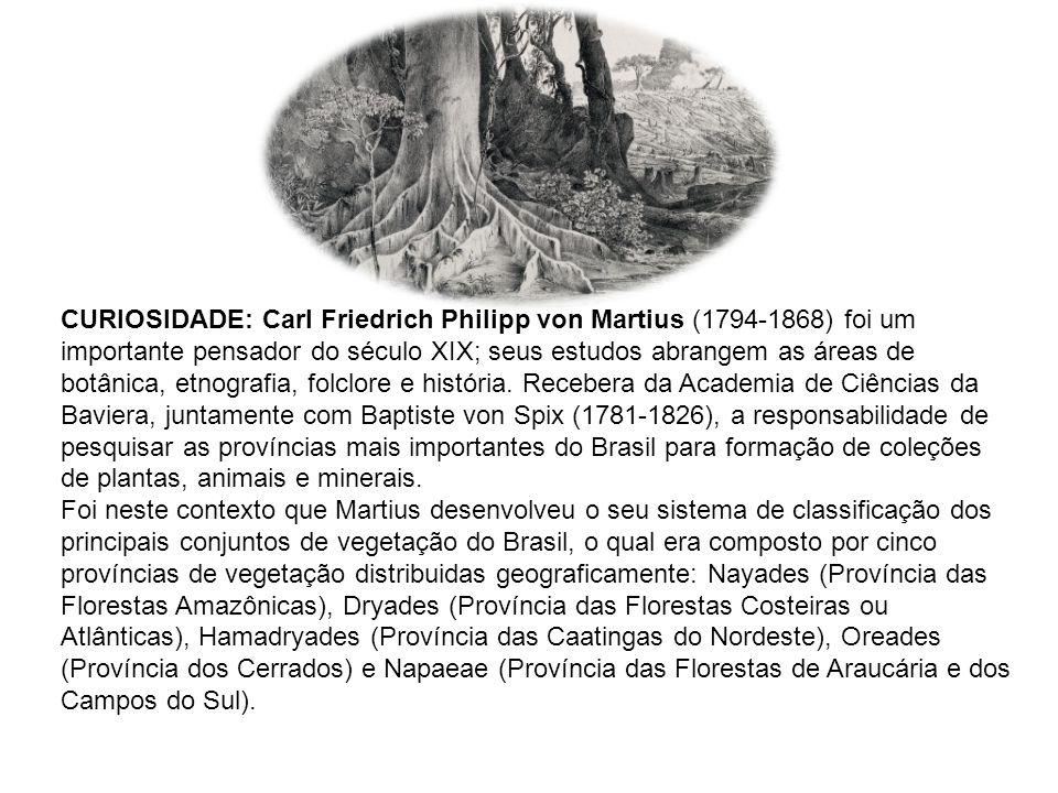 CURIOSIDADE: Carl Friedrich Philipp von Martius (1794-1868) foi um importante pensador do século XIX; seus estudos abrangem as áreas de botânica, etnografia, folclore e história. Recebera da Academia de Ciências da Baviera, juntamente com Baptiste von Spix (1781-1826), a responsabilidade de pesquisar as províncias mais importantes do Brasil para formação de coleções de plantas, animais e minerais.
