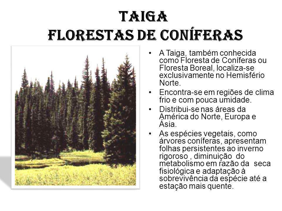 TAIGA FLORESTAS DE CONÍFERAS
