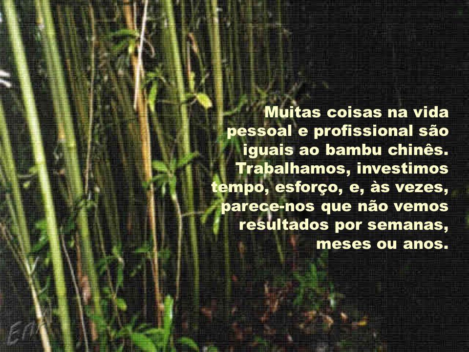 Muitas coisas na vida pessoal e profissional são iguais ao bambu chinês.