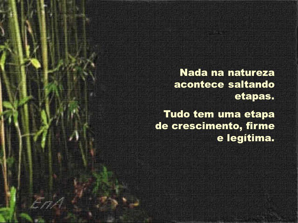 Nada na natureza acontece saltando etapas.