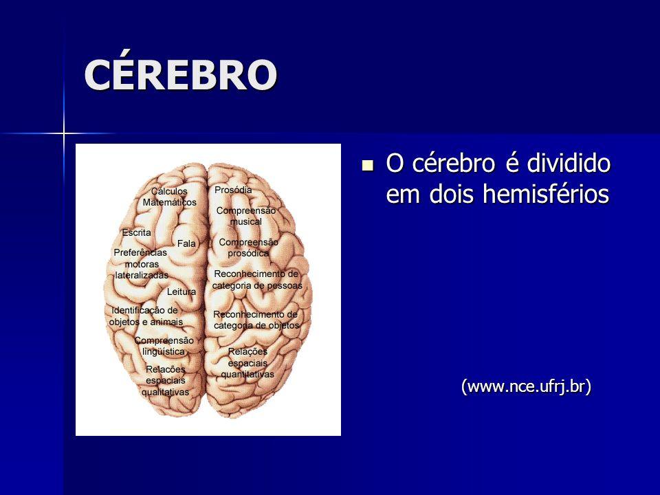 CÉREBRO O cérebro é dividido em dois hemisférios (www.nce.ufrj.br)