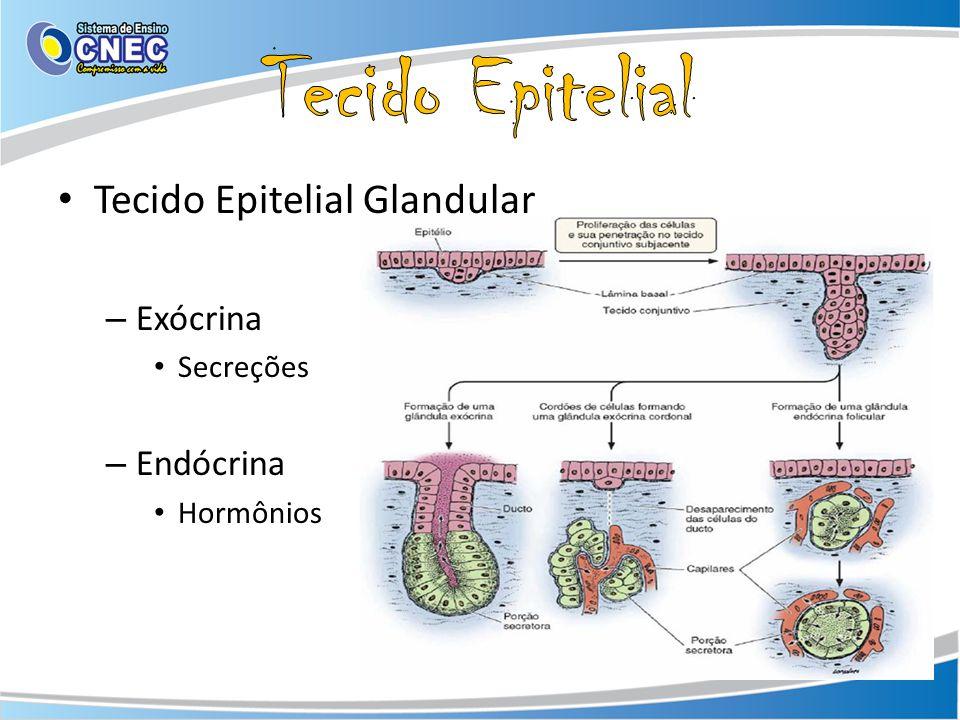 Tecido Epitelial Tecido Epitelial Glandular Exócrina Endócrina