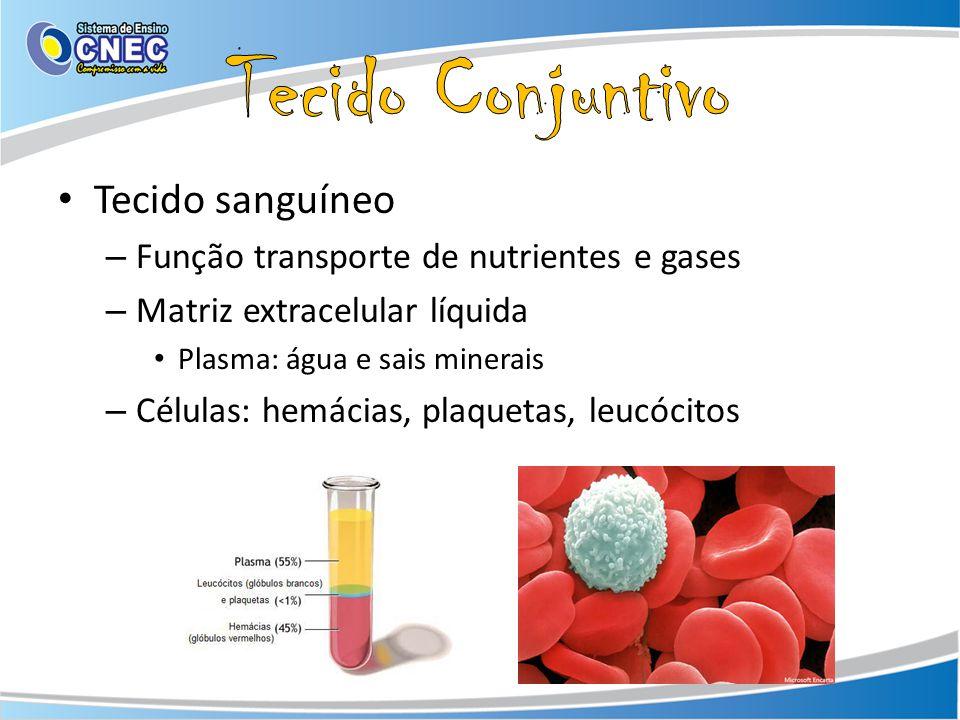 Tecido Conjuntivo Tecido sanguíneo
