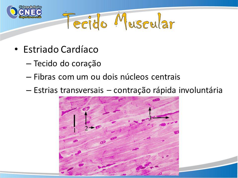 Tecido Muscular Estriado Cardíaco Tecido do coração