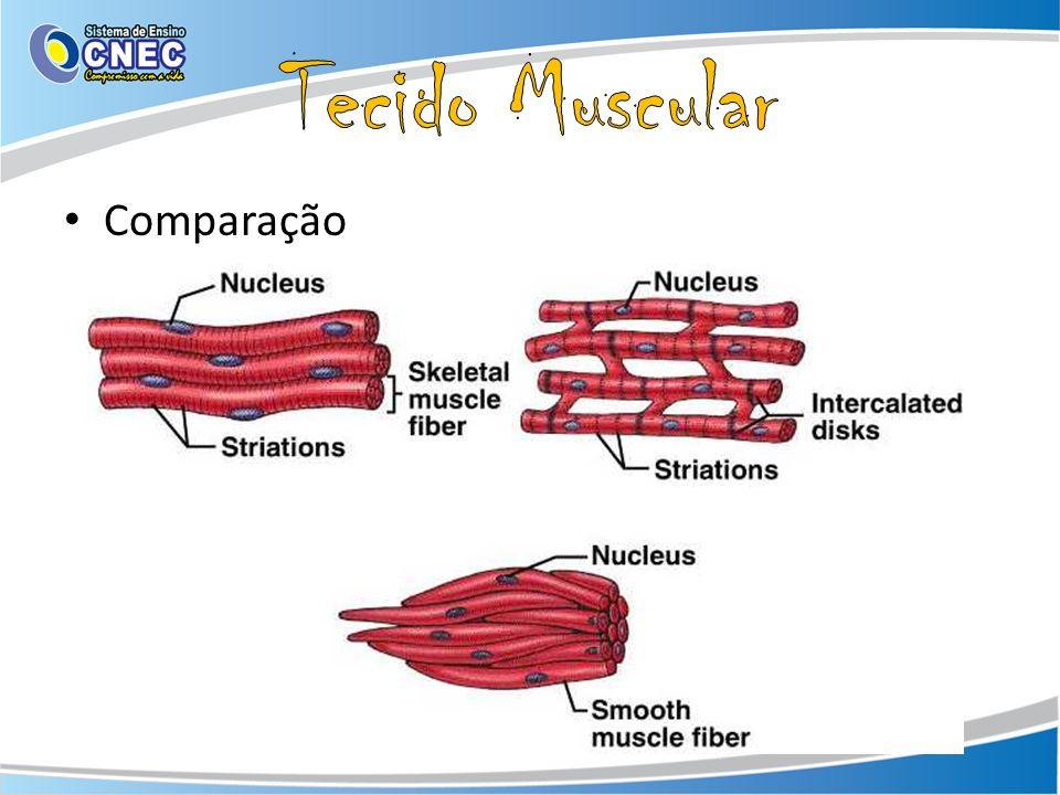 Tecido Muscular Comparação