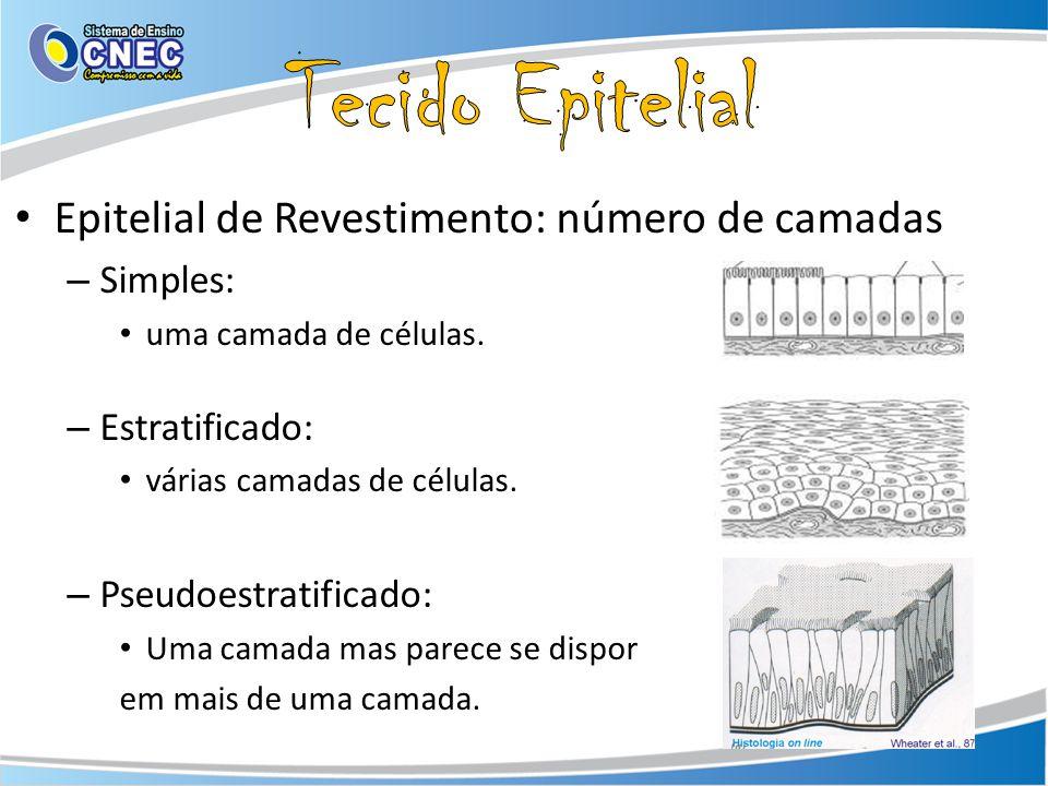 Tecido Epitelial Epitelial de Revestimento: número de camadas Simples: