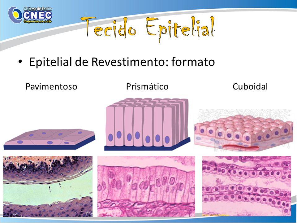 Tecido Epitelial Epitelial de Revestimento: formato Pavimentoso