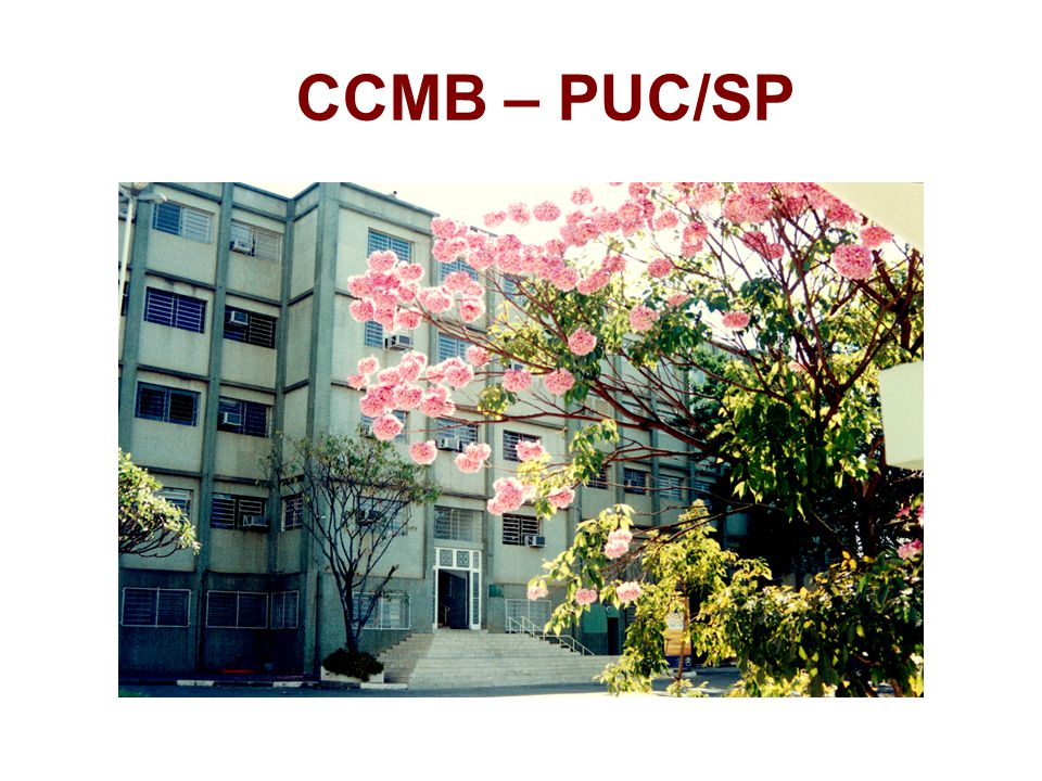CCMB – PUC/SP