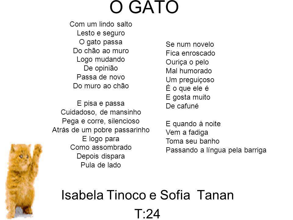 Isabela Tinoco e Sofia Tanan T:24