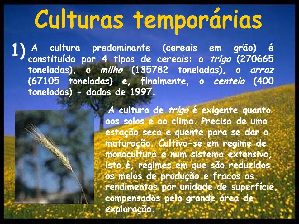 Culturas temporárias 1)