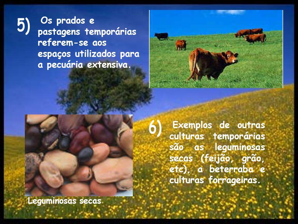 Os prados e pastagens temporárias referem-se aos espaços utilizados para a pecuária extensiva.