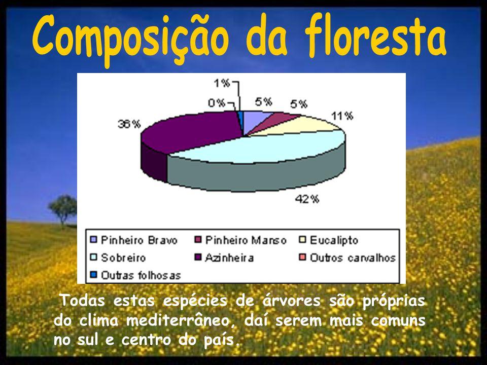 Composição da floresta