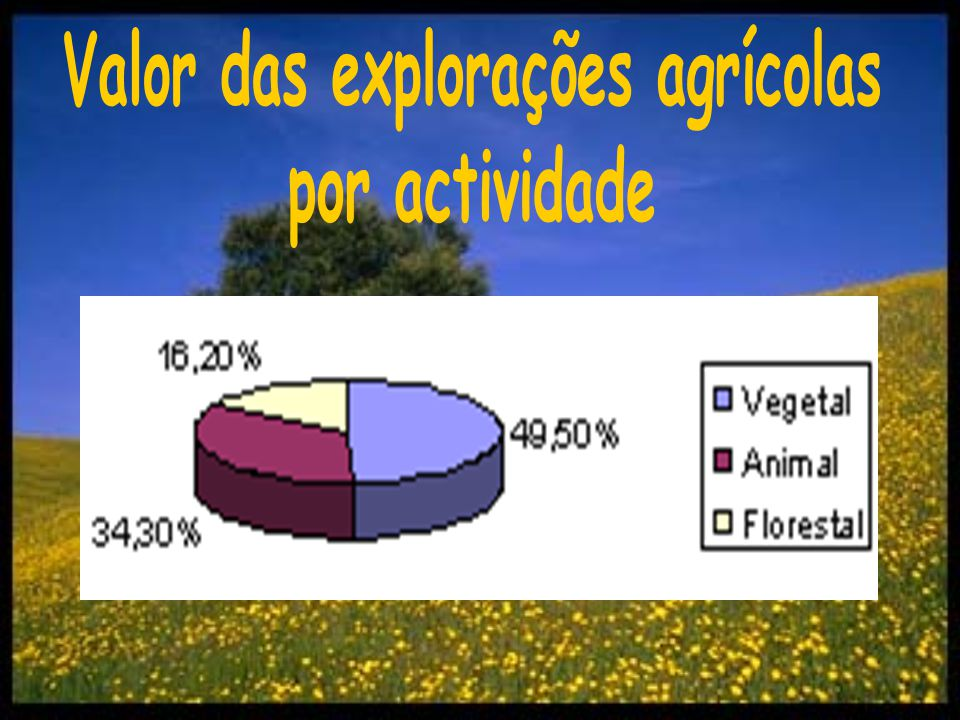 Valor das explorações agrícolas