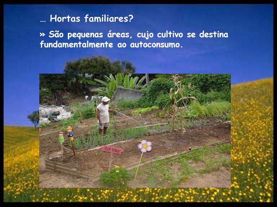 … Hortas familiares » São pequenas áreas, cujo cultivo se destina fundamentalmente ao autoconsumo.