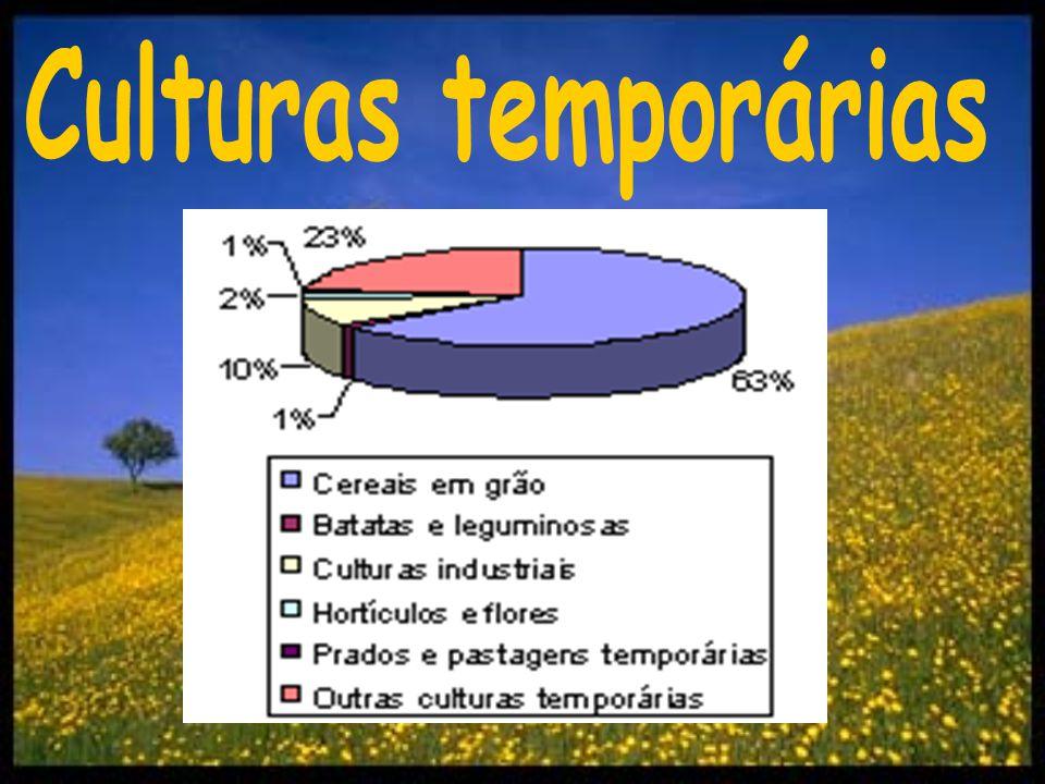 Culturas temporárias