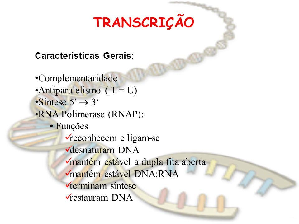 TRANSCRIÇÃO Complementaridade Antiparalelismo ( T = U) Síntese 5  3'
