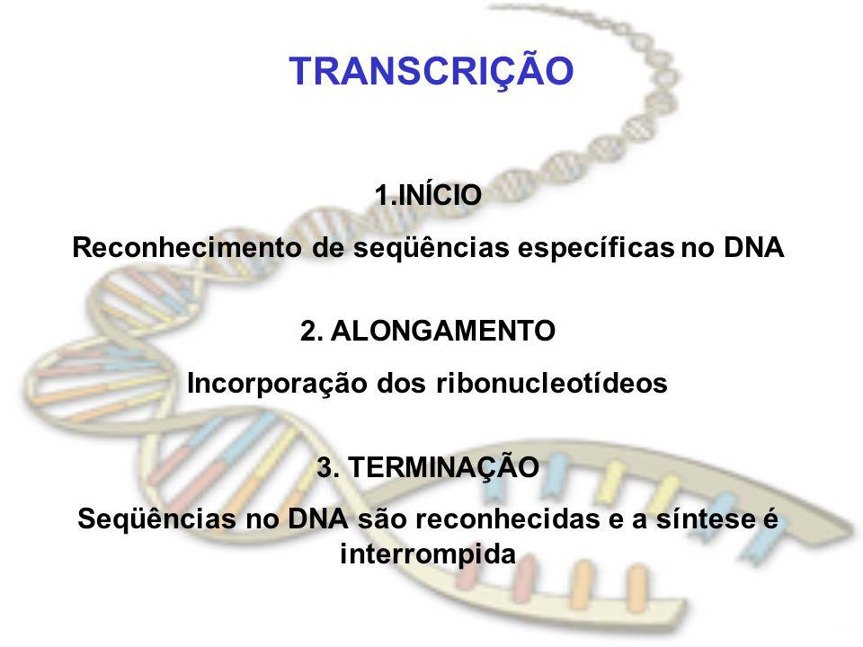 TRANSCRIÇÃO 1.INÍCIO Reconhecimento de seqüências específicas no DNA