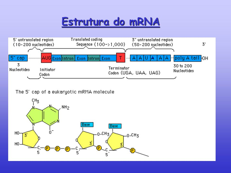 Estrutura do mRNA