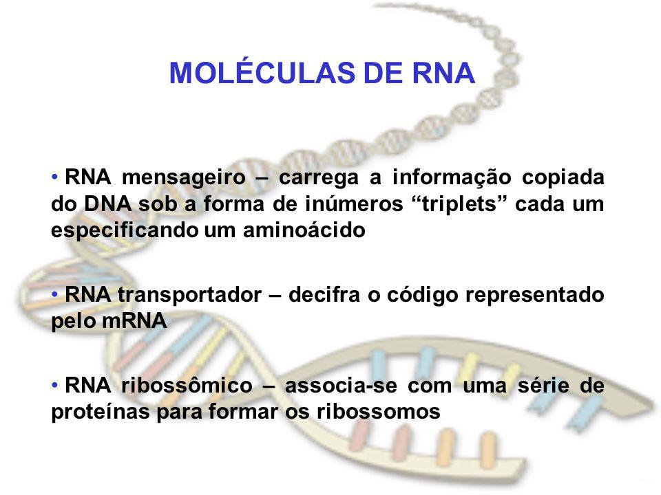 MOLÉCULAS DE RNA RNA mensageiro – carrega a informação copiada do DNA sob a forma de inúmeros triplets cada um especificando um aminoácido.