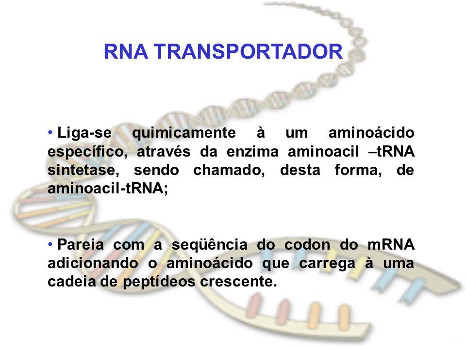 RNA TRANSPORTADOR