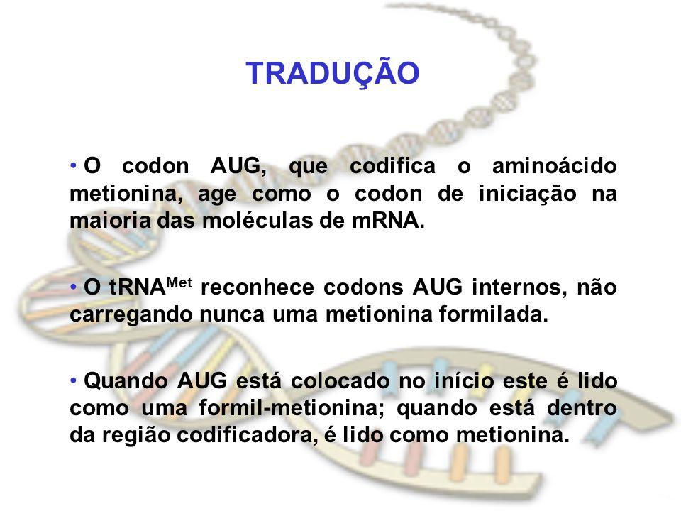 TRADUÇÃO O codon AUG, que codifica o aminoácido metionina, age como o codon de iniciação na maioria das moléculas de mRNA.