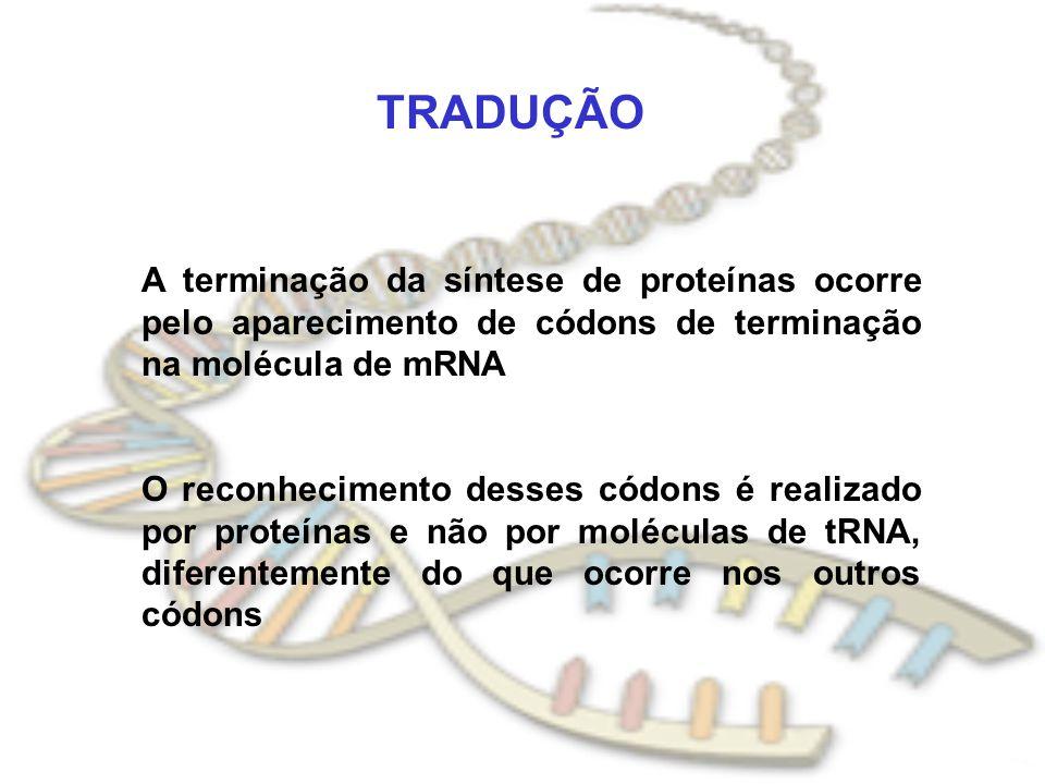 TRADUÇÃO A terminação da síntese de proteínas ocorre pelo aparecimento de códons de terminação na molécula de mRNA.