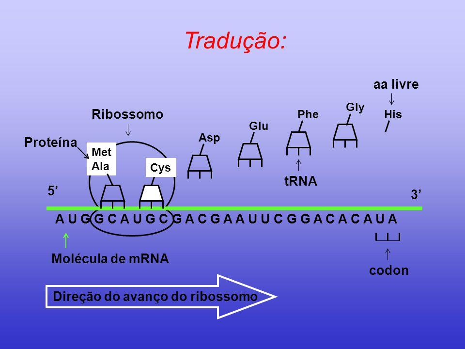 Tradução: aa livre Ribossomo Proteína tRNA 5' 3'