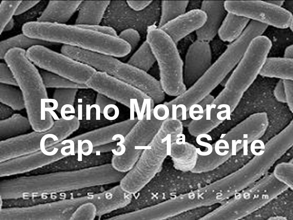 Reino Monera Cap. 3 – 1ª Série