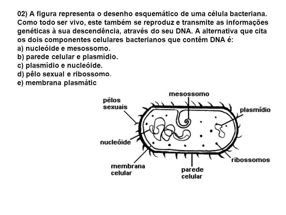 02) A figura representa o desenho esquemático de uma célula bacteriana