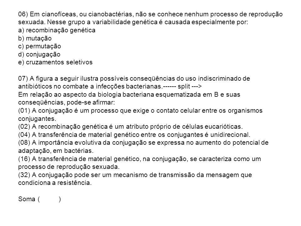 06) Em cianofíceas, ou cianobactérias, não se conhece nenhum processo de reprodução sexuada.