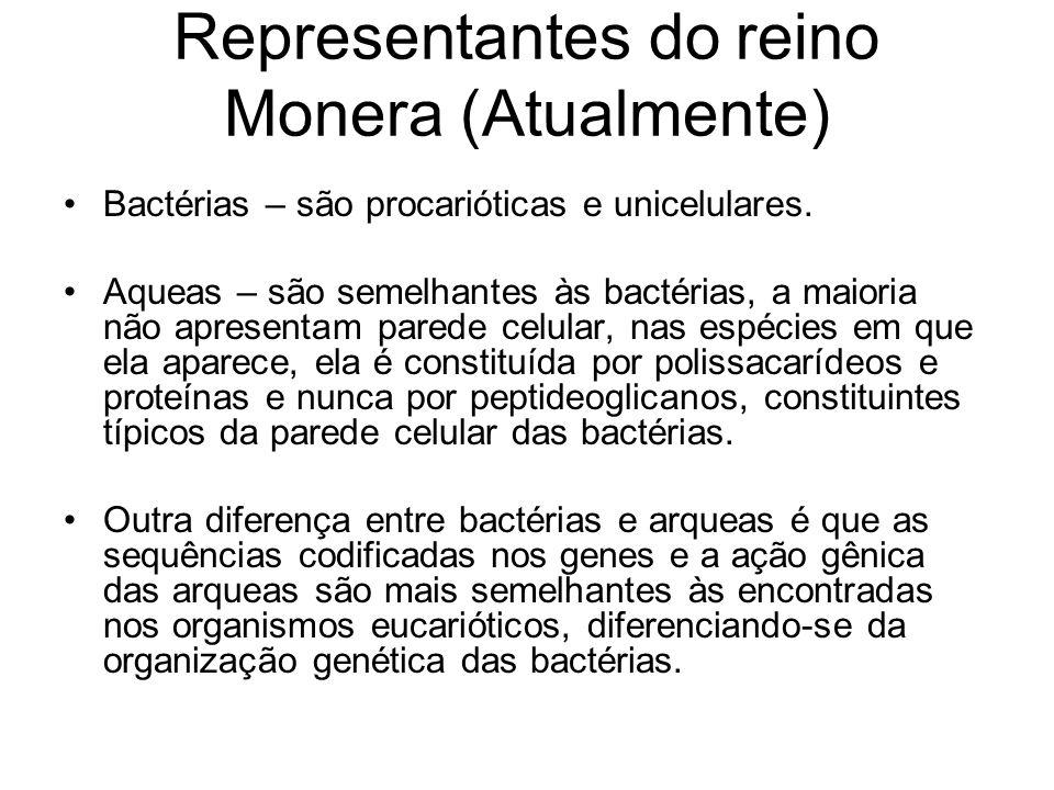 Representantes do reino Monera (Atualmente)