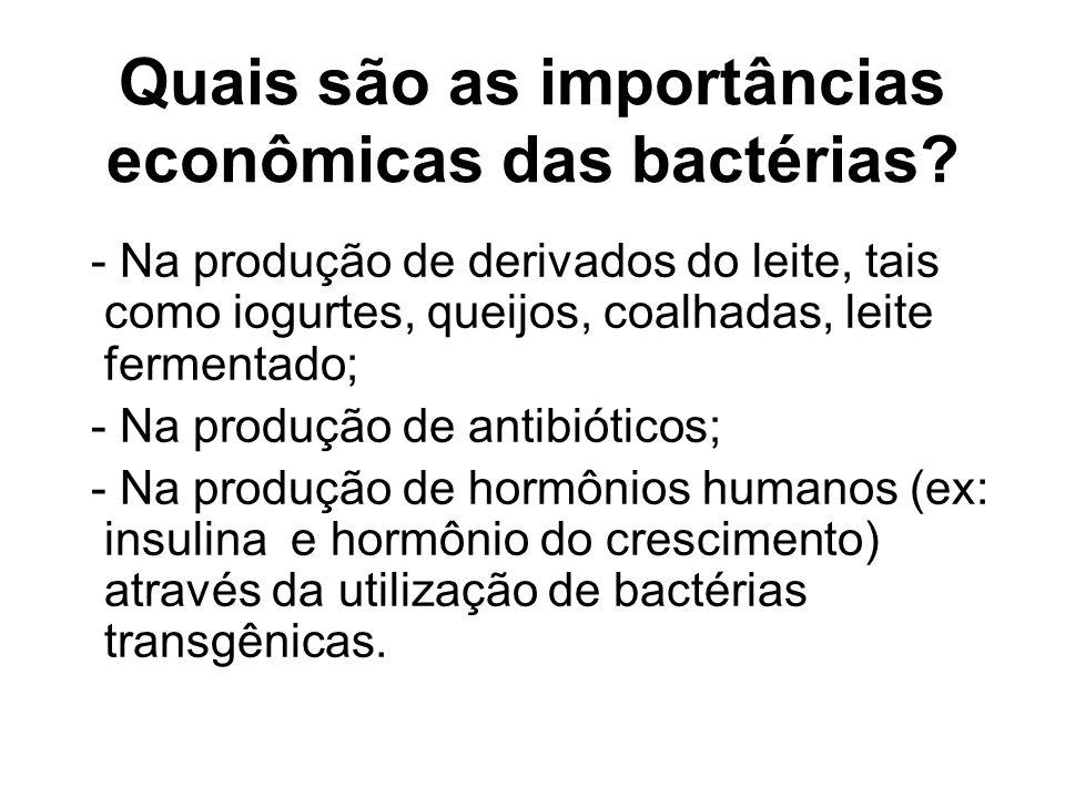 Quais são as importâncias econômicas das bactérias
