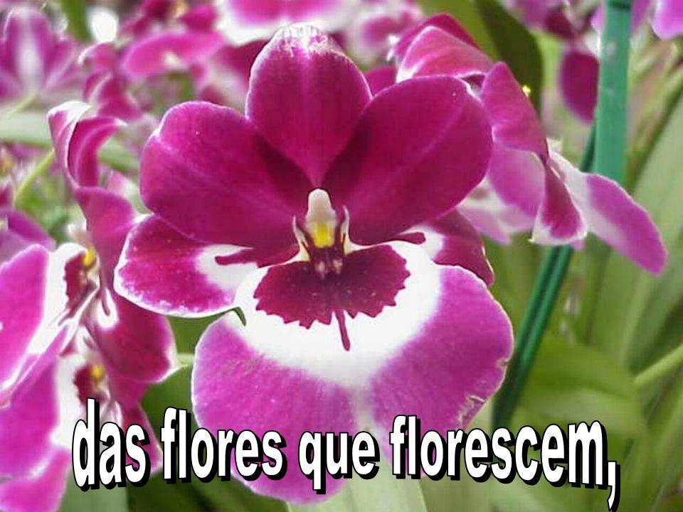 das flores que florescem,