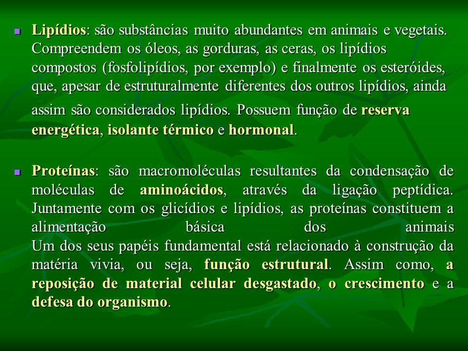 Lipídios: são substâncias muito abundantes em animais e vegetais