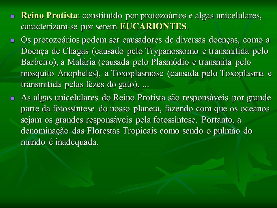 Reino Protista: constituído por protozoários e algas unicelulares, caracterizam-se por serem EUCARIONTES.