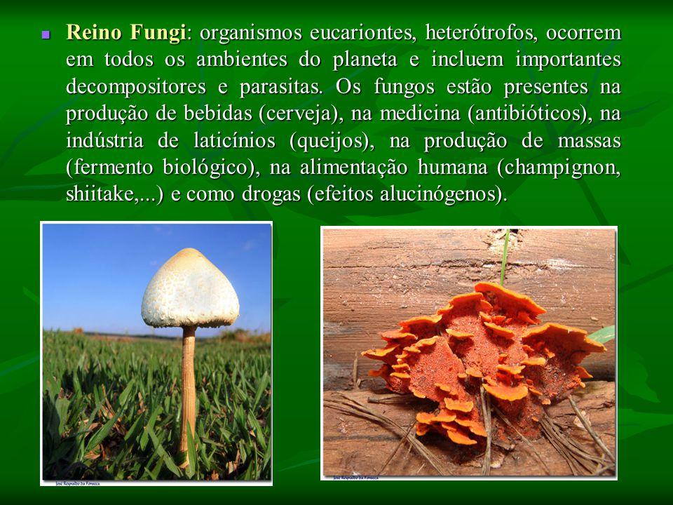 Reino Fungi: organismos eucariontes, heterótrofos, ocorrem em todos os ambientes do planeta e incluem importantes decompositores e parasitas.