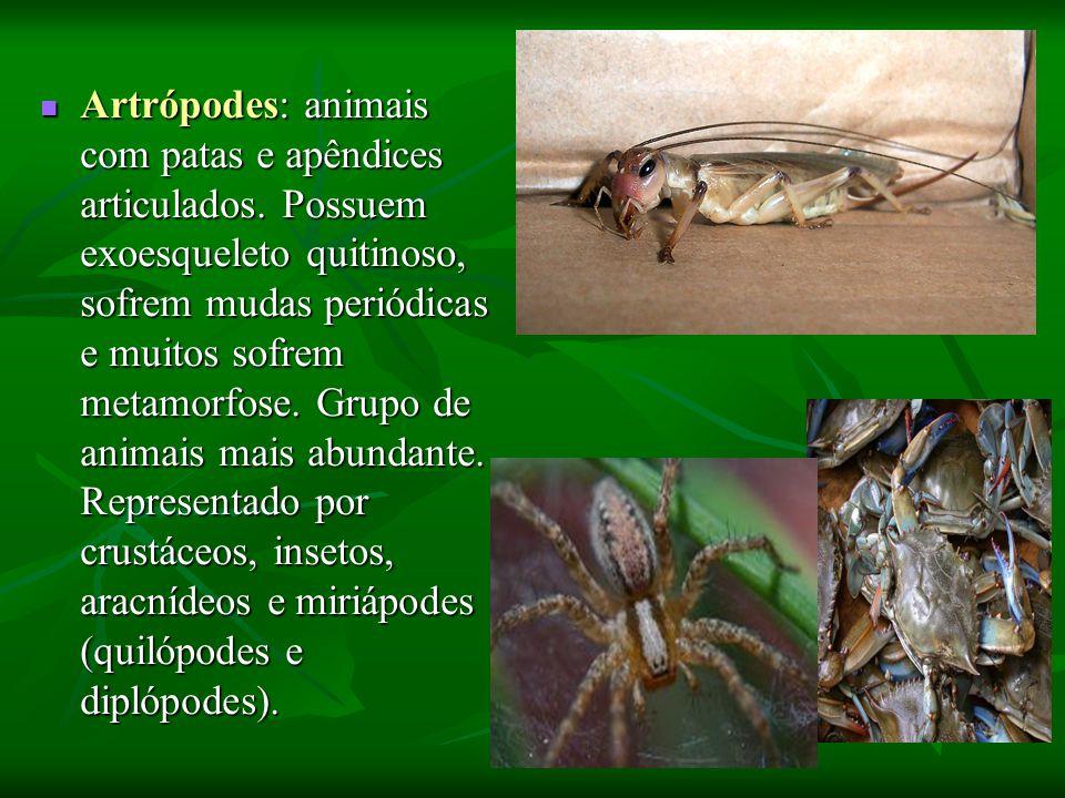 Artrópodes: animais com patas e apêndices articulados