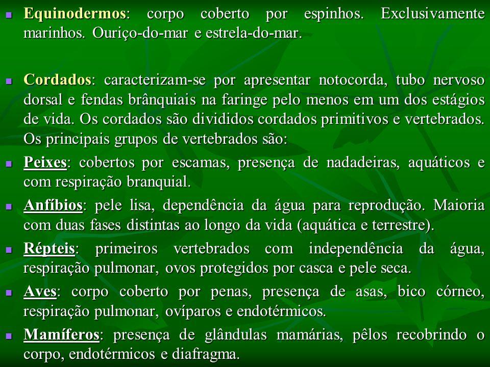 Equinodermos: corpo coberto por espinhos. Exclusivamente marinhos