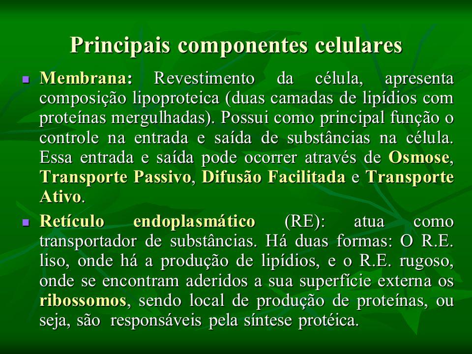 Principais componentes celulares