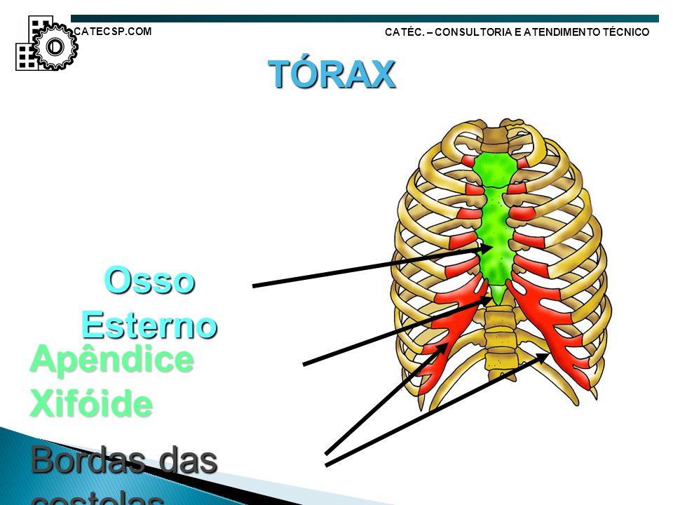 TÓRAX Osso Esterno Apêndice Xifóide Bordas das costelas CATECSP.COM